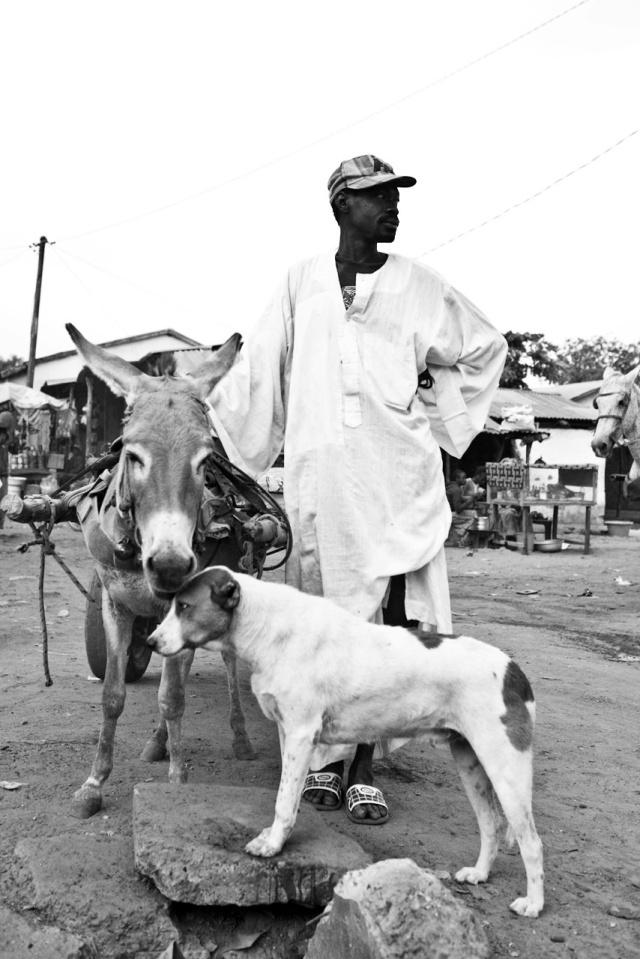 Donkey.dog.B&W